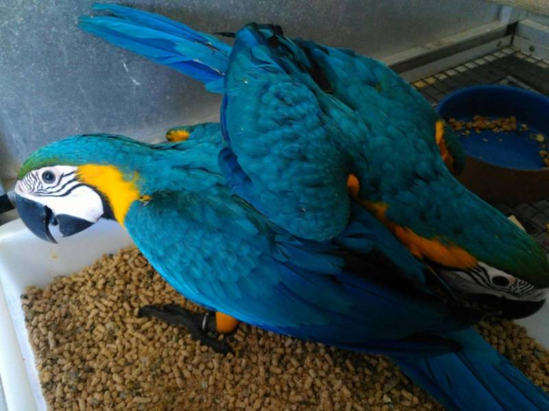 Callahan Birds For Sale Local Classifieds Buy Sell Free Ads Florida